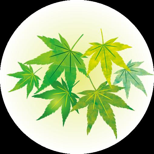 leaf_i02